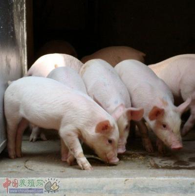 美国法规将令猪场可定制处方疫苗