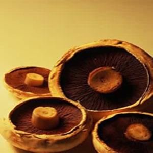 大棚蘑菇栽培技术要点