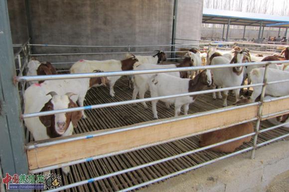 用水清洗羊舍的方法