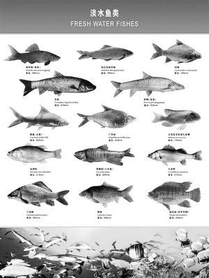 食盐在鱼病防治中的应用