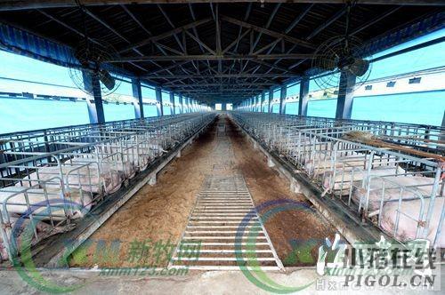 猪场污染整治不能一拆了之改造升级是关键