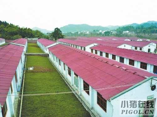 养猪场为啥要建绿化隔离带?