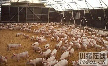 """奈曼农民步入""""视频养猪""""时代"""