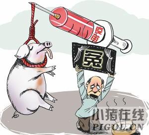 猪发生疫苗反应的原因及预防
