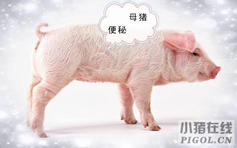 母猪便秘的原因分析