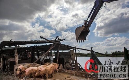 江西南昌瑶湖沿线20余个养猪场搬迁拆除