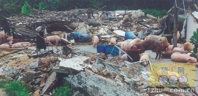 九湖镇院后村两户非法养猪场被依法拆除