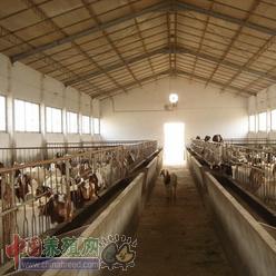 繁殖母羊不同期间饲养管理技术