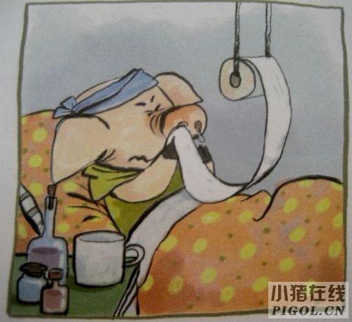 猪感冒不等于猪流感