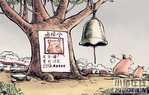 江西省80%左右养殖场执行环评制度不到位