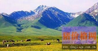 2016年黑龙江省畜牧业增加值将继续上升