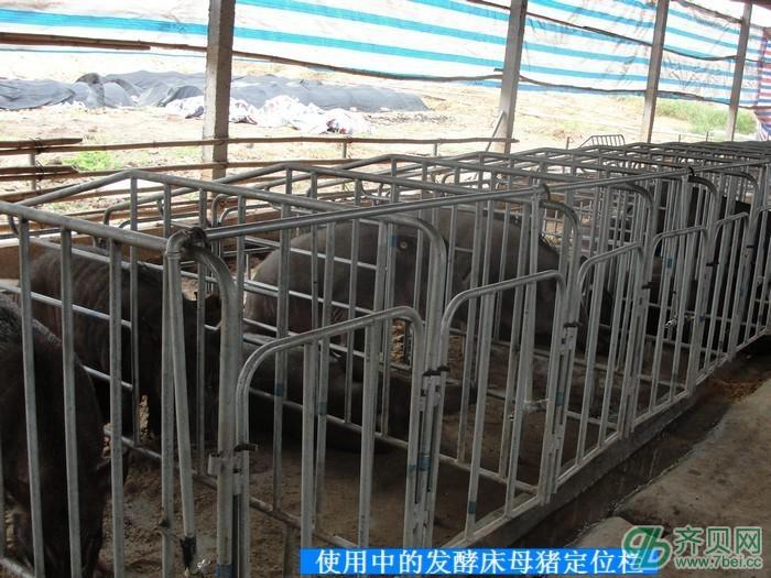 活力发酵床猪栏建造图