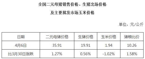 全国二元母猪销售价格、生猪出场价格及主要批发市场玉米价格(2016年4月6日)