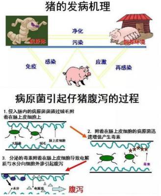 猪消化系统疾病最有效的治疗方案