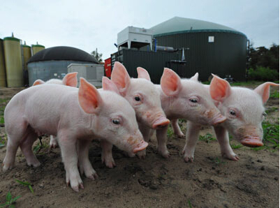 4月26日养猪业重要信息汇总