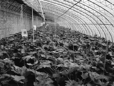 立冬气温骤降蔬菜需防寒冻