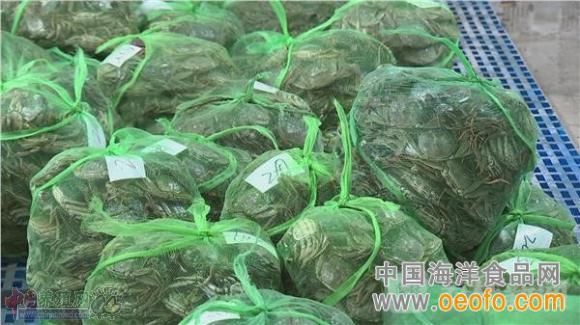 江苏常州:养殖户销售进入尾声 大闸蟹价格走高(图)