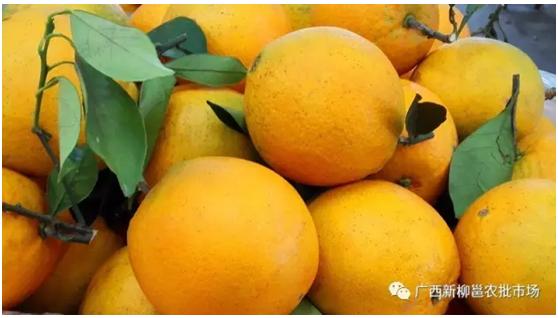 """广西新柳邕市场:春季水果""""鲜""""入为主 枇杷草莓菠萝成新宠"""
