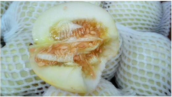 广西新柳邕市场:有口福啦 舌尖上的香瓜上市了