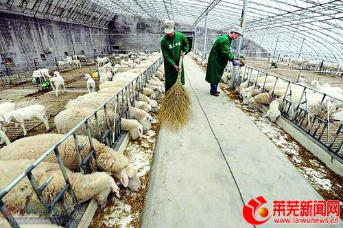 莱芜嬴泰:标准化养殖带动贫困户脱贫
