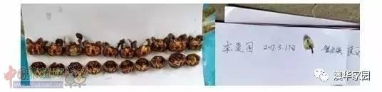 河蟹出现普遍空肠、花肝、壳薄且脆,养殖户如何处理?