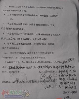 小心!养鹅诈骗产业链,涉及豫、川、冀、黔等15省