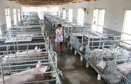 四川省出台畜禽养殖场(小区)规模标准