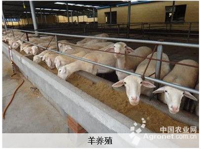 教你如何降低养羊的成本