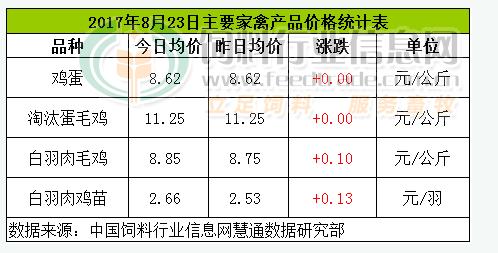 8月23日鸡评:蛋价滞涨 鸡价、苗价偏强运行