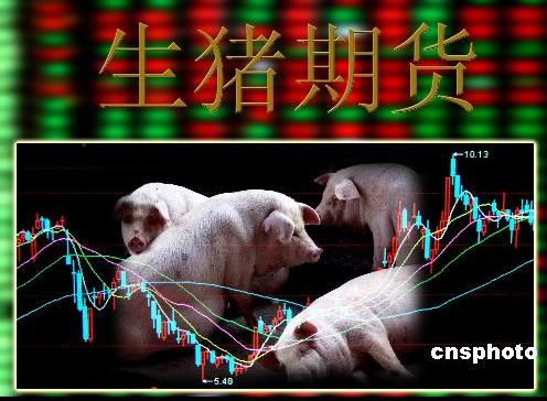 """中国生猪期货细节已制定""""熨平""""猪肉价格周期波动"""