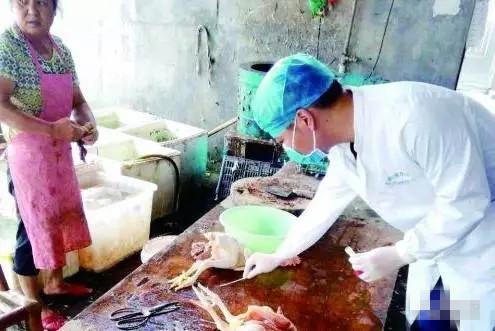 H7N9进入防疫关键期动防人员可免费上门给家禽接种