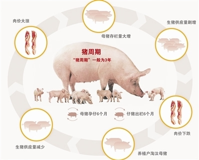 """发展生猪期货化解""""猪周期""""风险"""