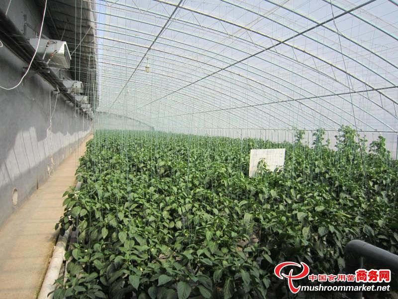 """科技创新点""""草""""成金——菌渣综合利用助推食用菌产业新旧动能转换"""