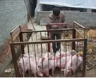 猪价整体调整东北再次回落,猪肉消费旺季即将来临屠宰企业陷入两难境地!