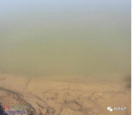 海参池塘封冰前管理建议