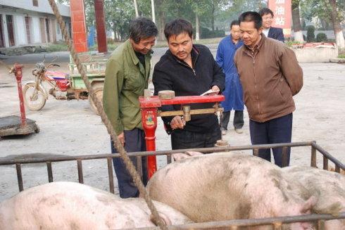 2月26日养猪业重要信息汇总