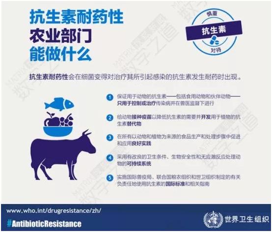 陕西检出鸡蛋抗生素超标这些抗生素千万不要用!