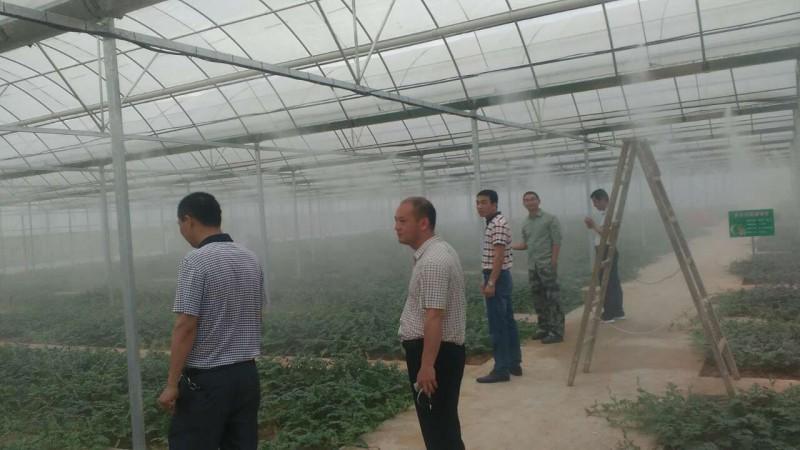 人工造雾设备在农业方面温室大棚食用菌苗圃等项目的应用