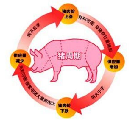 5月29日养猪业重要信息汇总