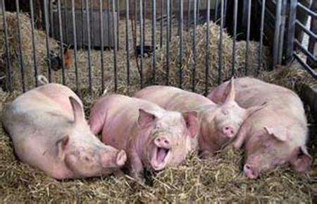 6月6日养猪业重要信息汇总