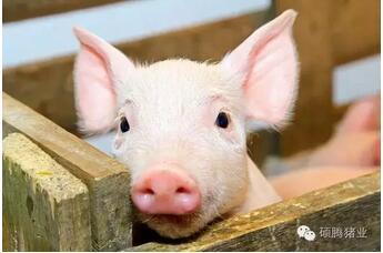 7月2日养猪业重要信息汇总