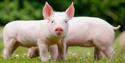 7月19日养猪业重要信息汇总
