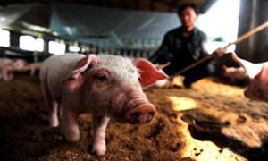 7月23日养猪业重要信息汇总