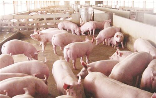中粮肉食:2018年第四季度生猪出栏量62万头,同比减少1.3%