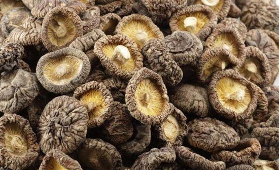 多种食用菌常用的加工方法