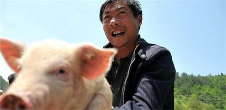 对生猪定点屠宰厂场屠宰活动和病害猪无害化处理的监督检查