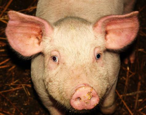 不要急着消灭散户!建议从饲料源头控制疫情!