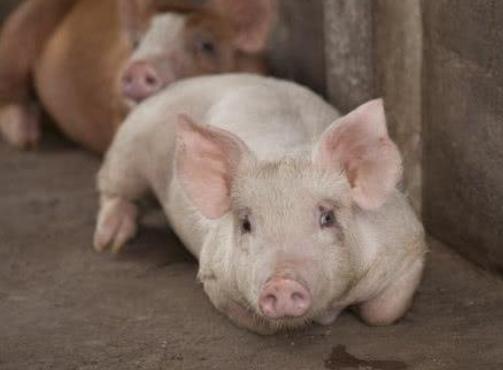 奢望生猪价格能够大面积上涨,基本上是已经不太可能了