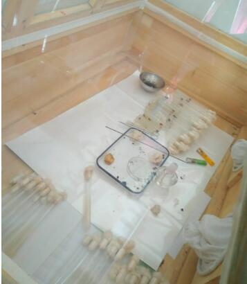 食用菌制种必备设备—接种箱