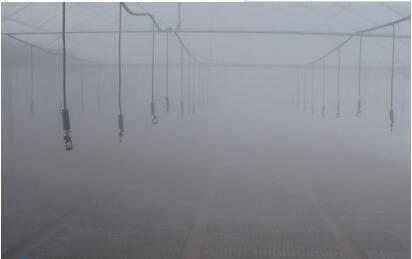 雾灌在温室大棚食用菌栽培中的应用